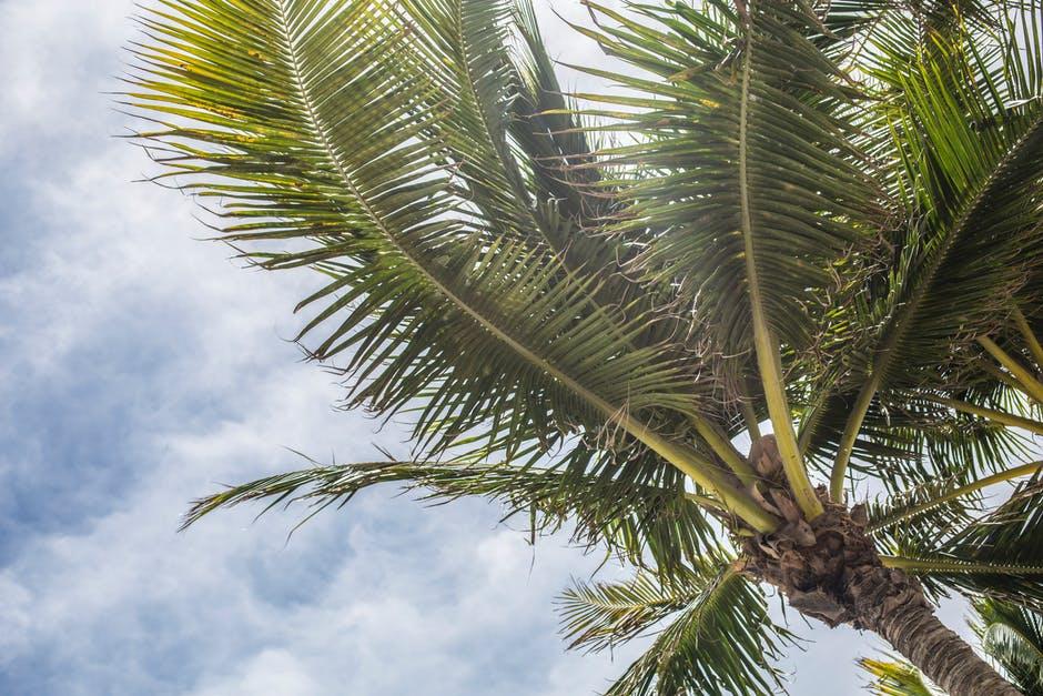 Beach Paradise (Beach Park) Hotel Miami Review