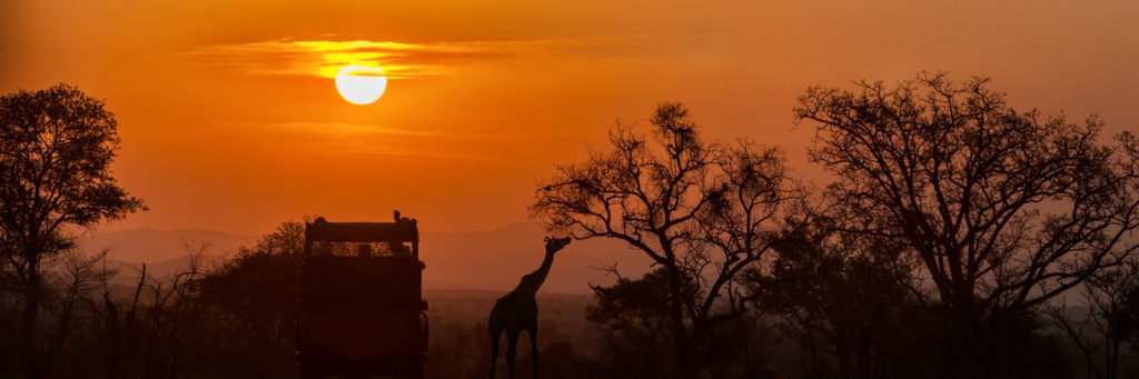 15 Things to Expect on Your First African Safari Vacation