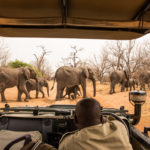 Africa Travel Guide: How to Plan an Unforgettable Safari