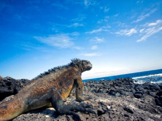 Everything You Need to Know About Traveling to the Galapagos Islands