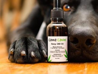 5 Ways CBD Oil Can Benefit Your Pets