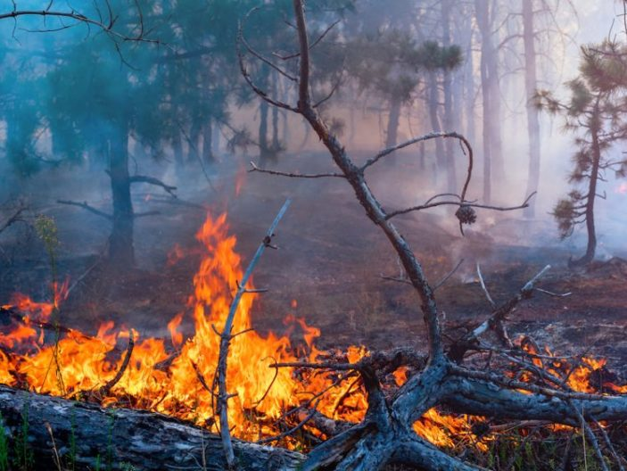 9 Ways You Should Prepare for a Wildfire