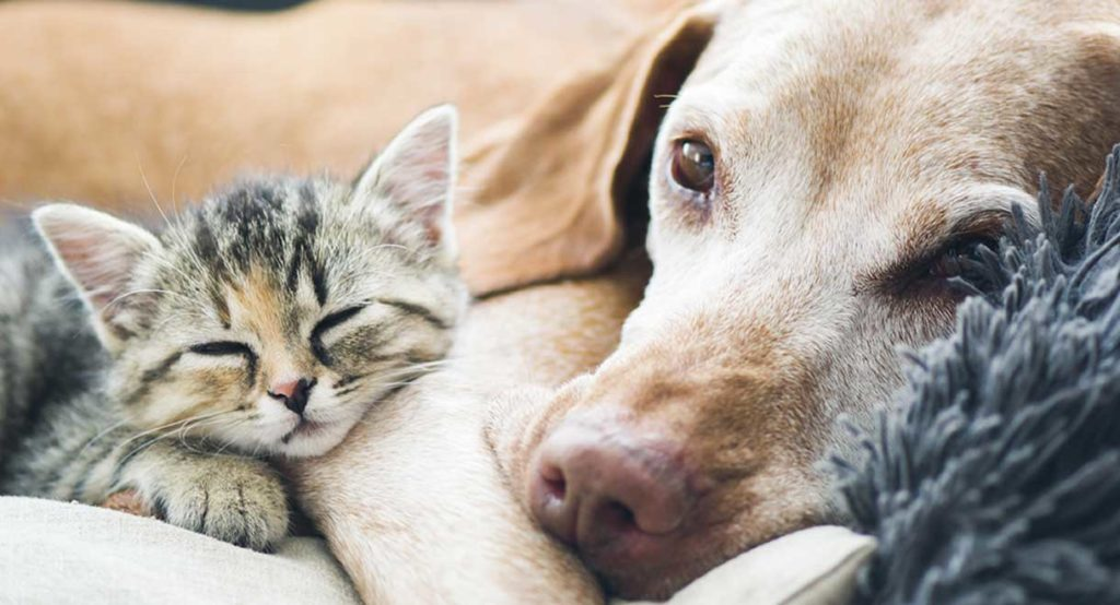 Can Cats and Dogs Live Together? 7 Tips to Help Your Precious Pets Coexist