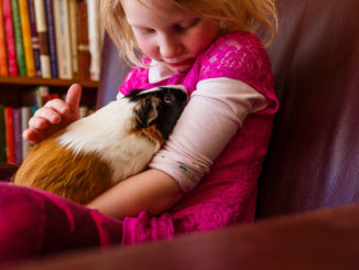 4 Ideas for Teaching Kids of All Ages About Animals