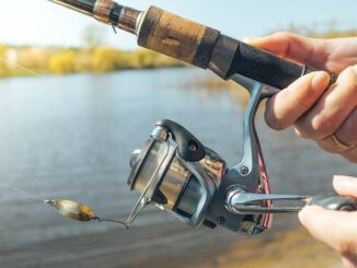 Buyer's Guide for the Best Spinning Reel
